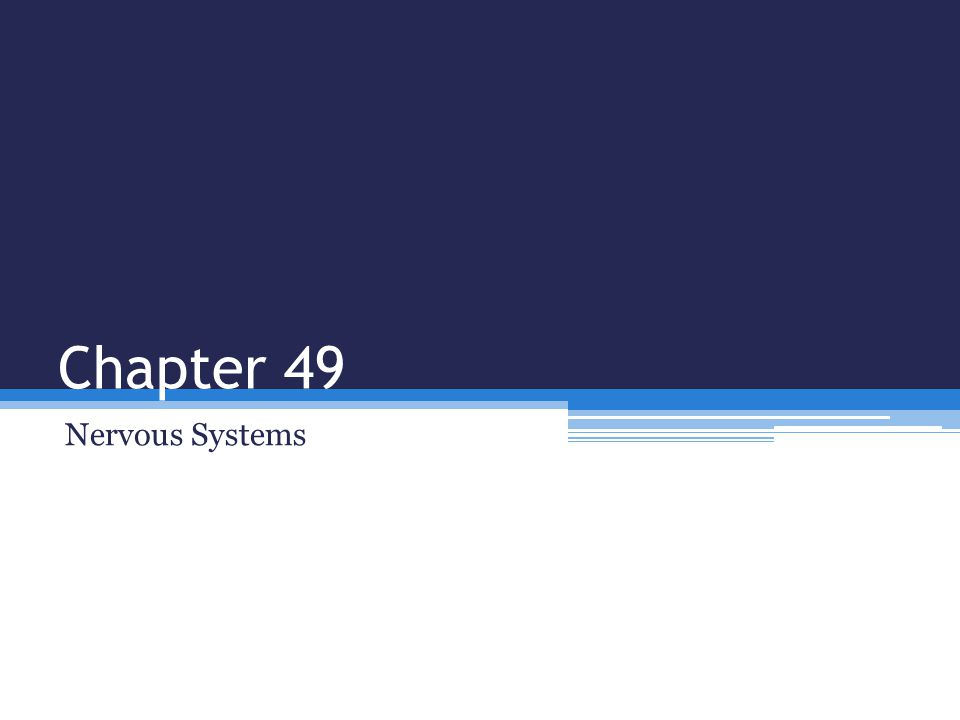 Chapter 49 Nervous Systems