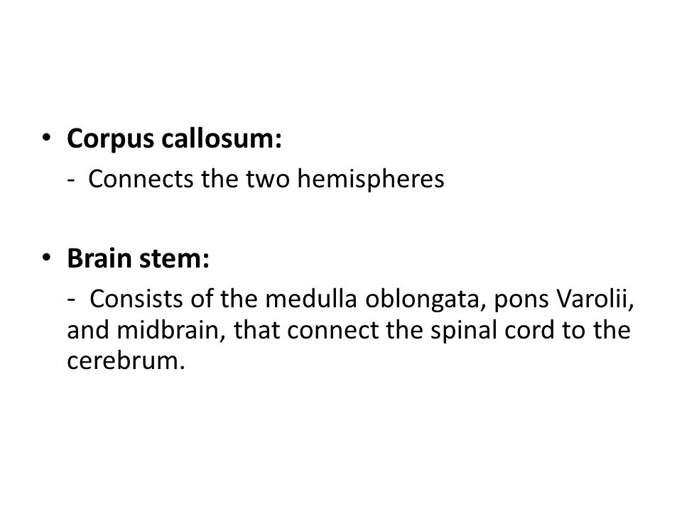 Corpus callosum: - Connects the two hemispheres. Brain stem: