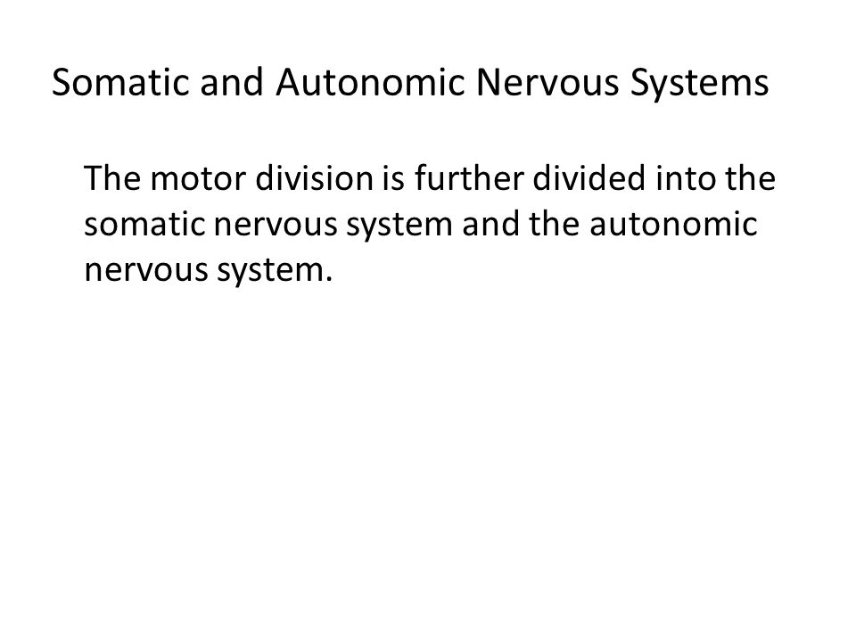 Somatic and Autonomic Nervous Systems