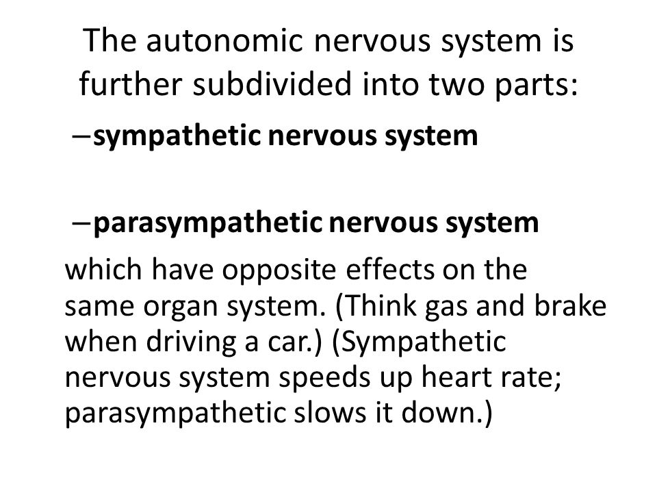 The autonomic nervous system is further subdivided into two parts: