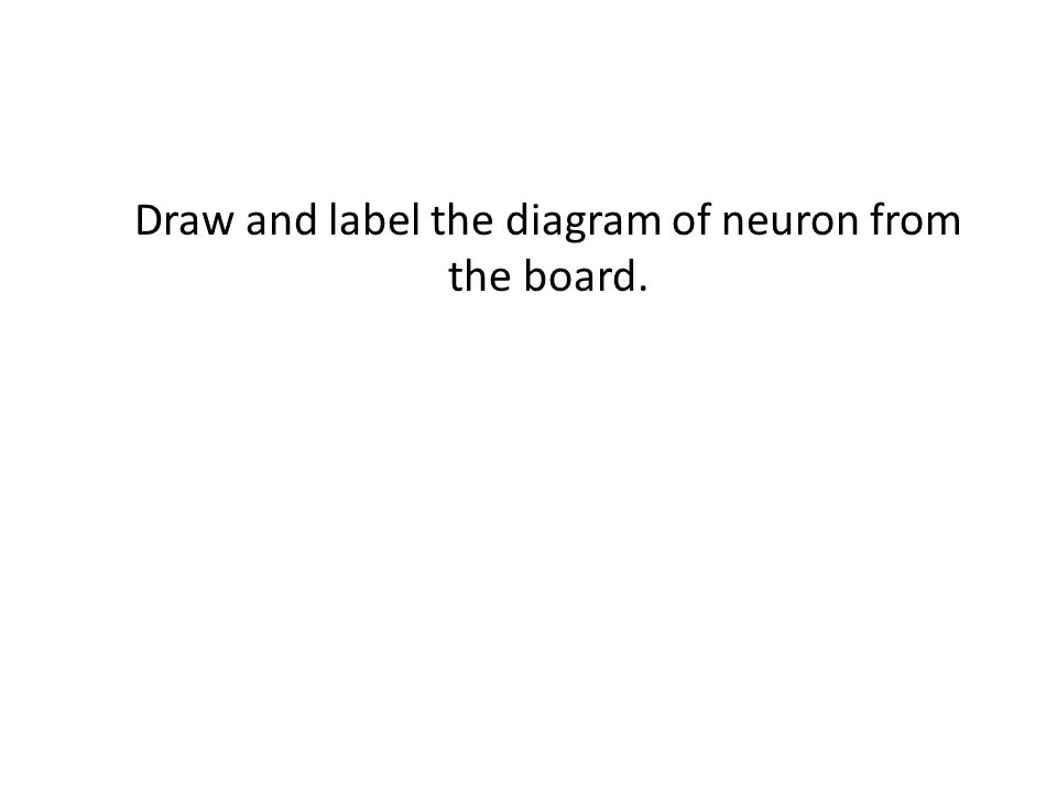 Draw and label the diagram of neuron from the board.