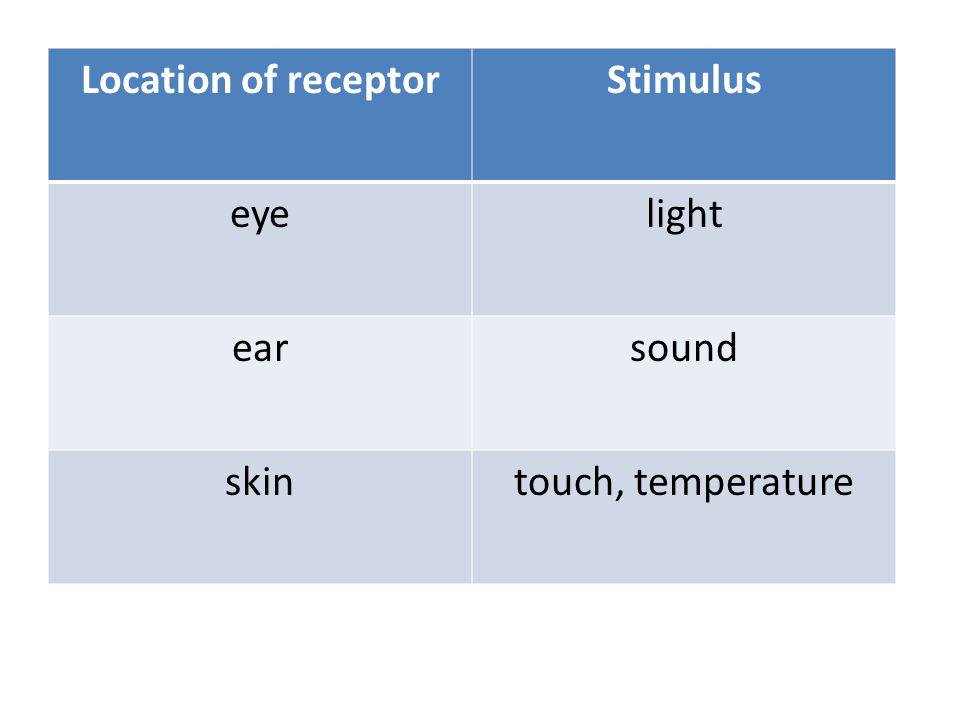 Location of receptor Stimulus eye light ear sound skin touch, temperature