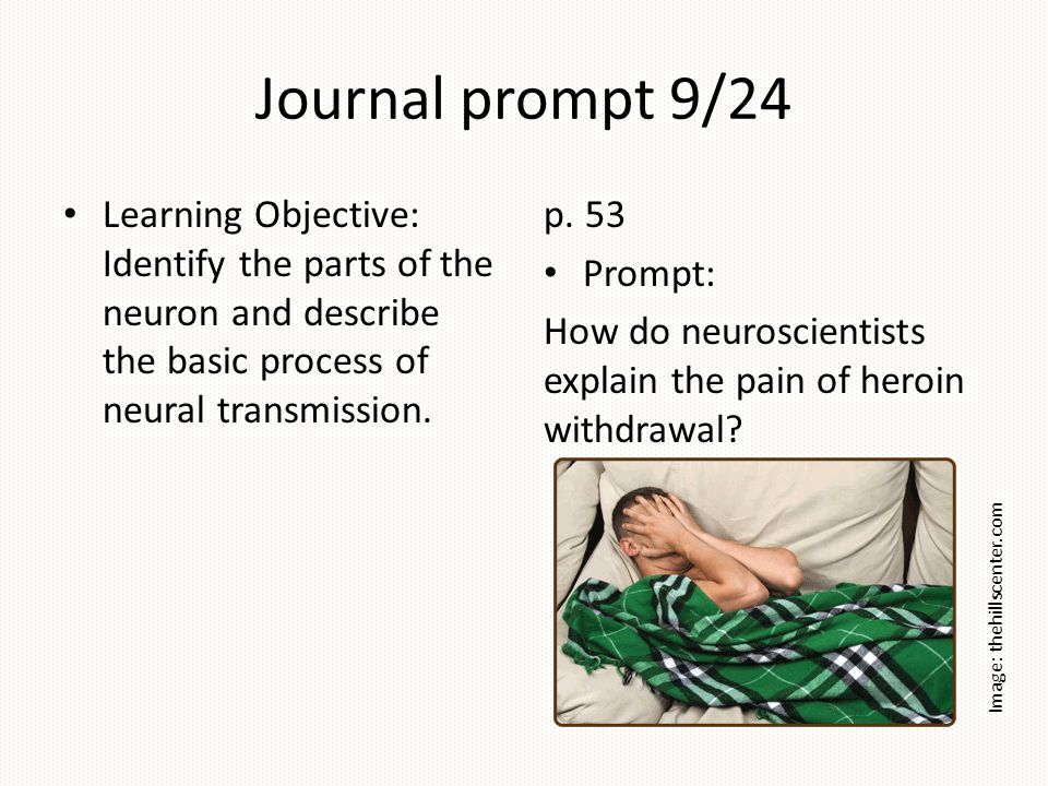 Journal prompt 9/24 Learning Objective: Identify the parts of the neuron and describe the basic process of neural transmission.