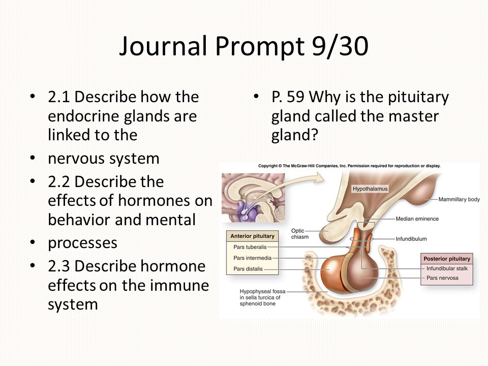 Journal Prompt 9/30 2.1 Describe how the endocrine glands are linked to the. nervous system.