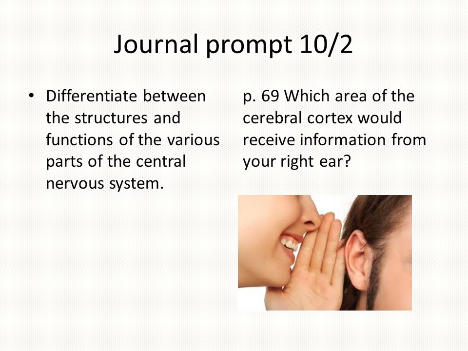 Journal prompt 10/2 Differentiate between the structures and functions of the various parts of the central nervous system.