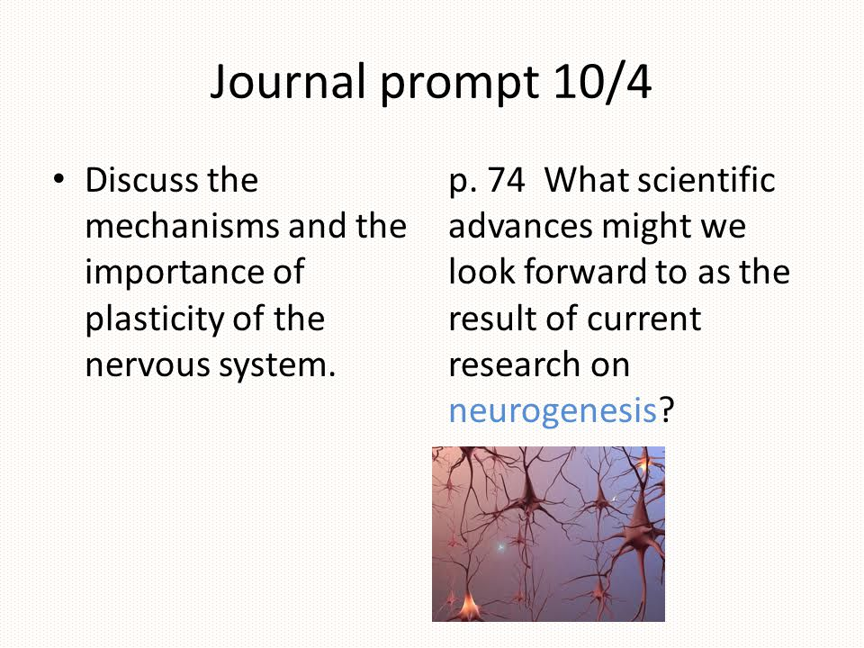 Journal prompt 10/4 Discuss the mechanisms and the importance of plasticity of the nervous system.