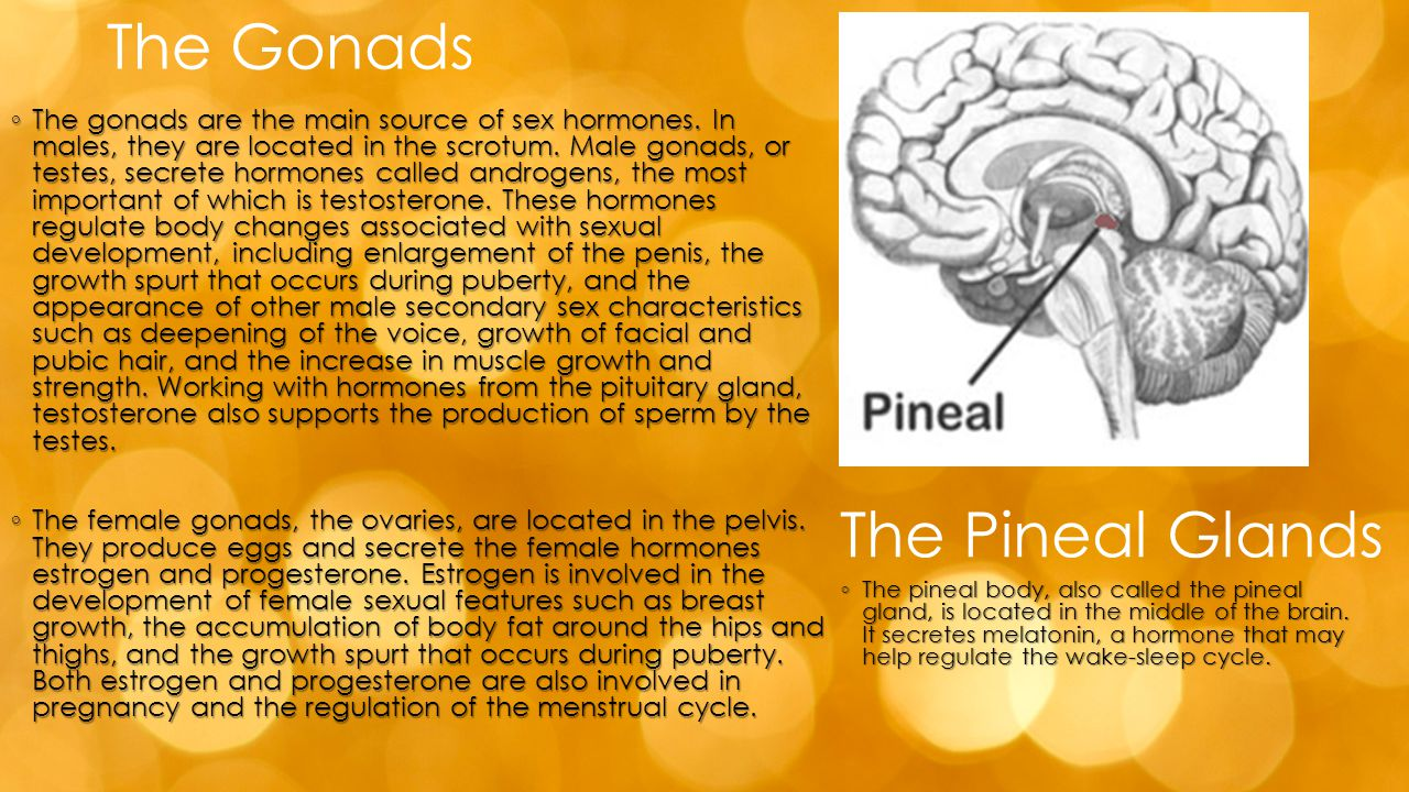 The Gonads The Pineal Glands