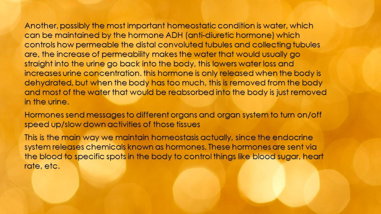 Another, possibly the most important homeostatic condition is water, which can be maintained by the hormone ADH (anti-diuretic hormone) which controls how permeable the distal convoluted tubules and collecting tubules are, the increase of permeability makes the water that would usually go straight into the urine go back into the body, this lowers water loss and increases urine concentration. this hormone is only released when the body is dehydrated, but when the body has too much, this is removed from the body and most of the water that would be reabsorbed into the body is just removed in the urine.