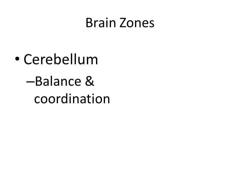 Brain Zones Cerebellum Balance & coordination