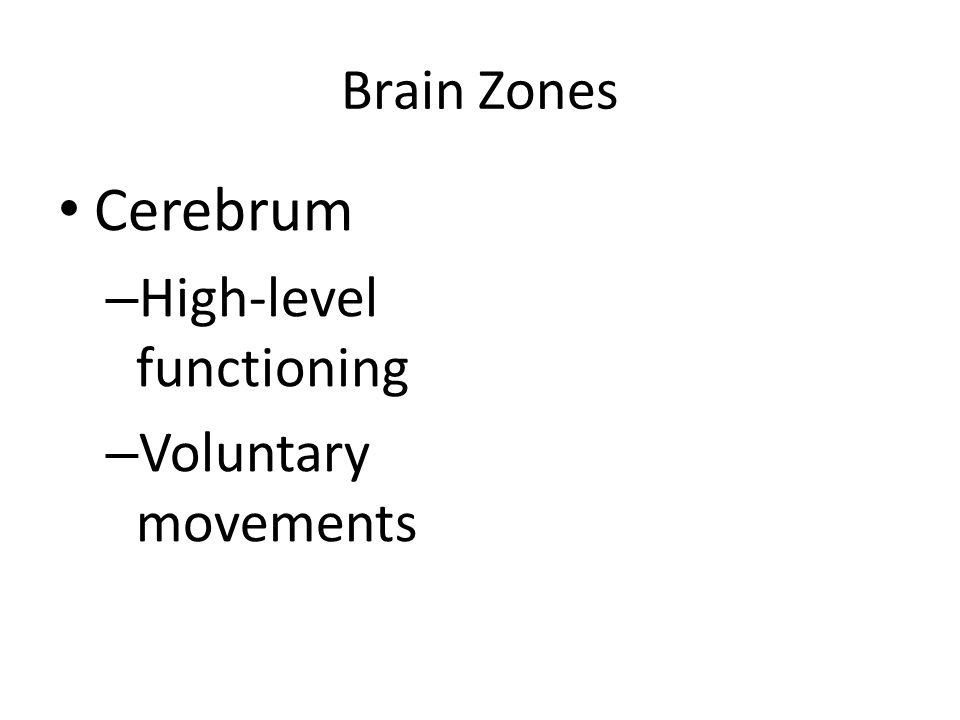 Brain Zones Cerebrum High-level functioning Voluntary movements