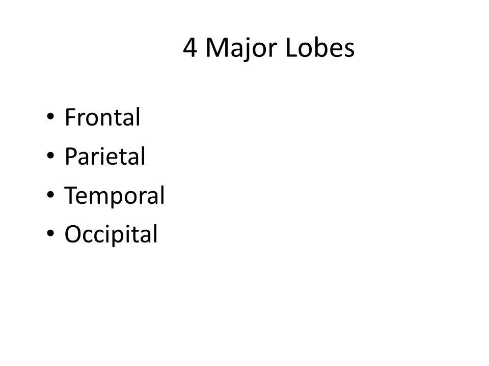 4 Major Lobes Frontal Parietal Temporal Occipital