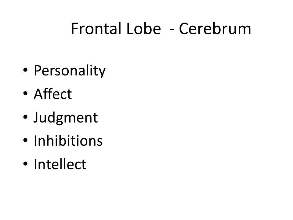 Frontal Lobe - Cerebrum