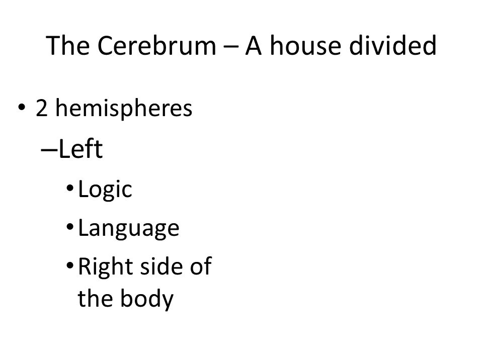 The Cerebrum – A house divided