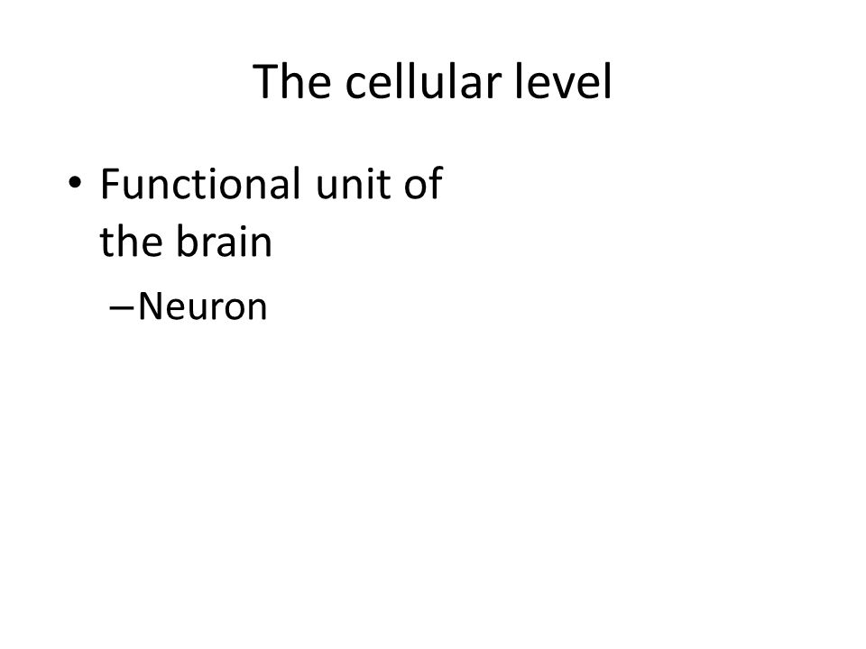 The cellular level Functional unit of the brain Neuron