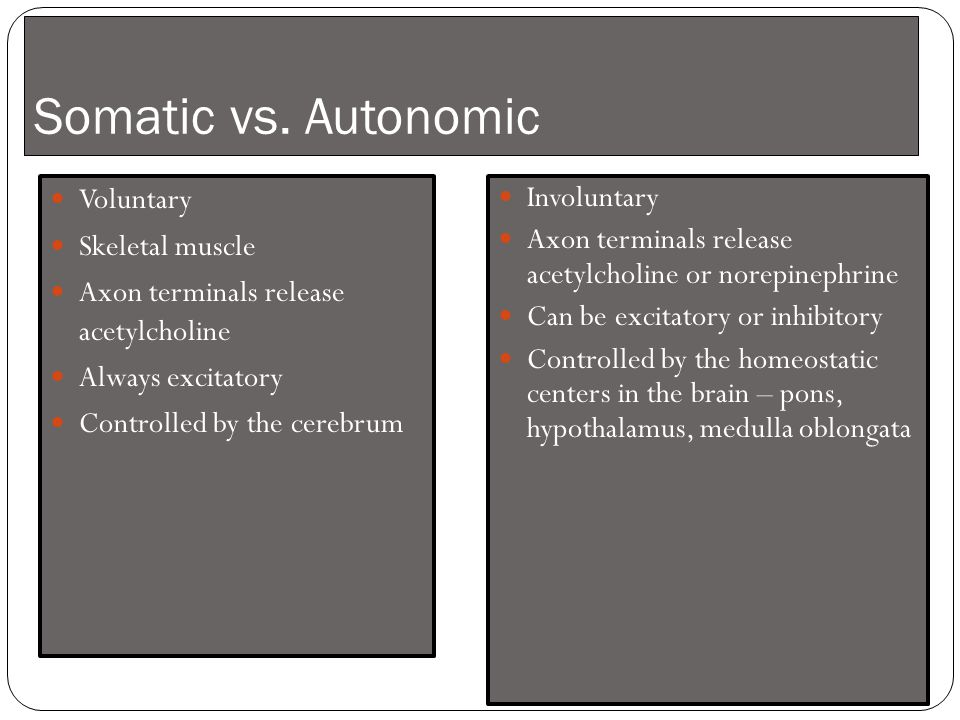 Somatic vs. Autonomic Voluntary Skeletal muscle