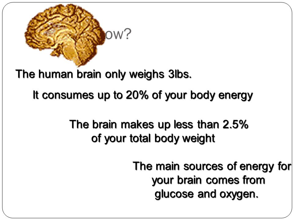 Did you know The human brain only weighs 3lbs.