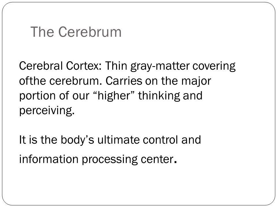 The Cerebrum Cerebral Cortex: Thin gray-matter covering ofthe cerebrum. Carries on the major portion of our higher thinking and perceiving.