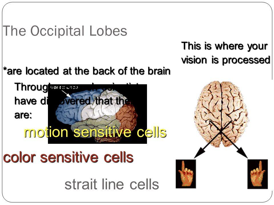 motion sensitive cells