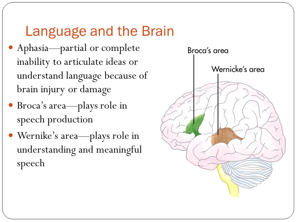 Language and the Brain Aphasia—partial or complete inability to articulate ideas or understand language because of brain injury or damage.