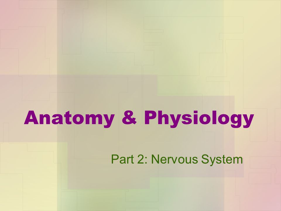 Anatomy & Physiology Part 2: Nervous System