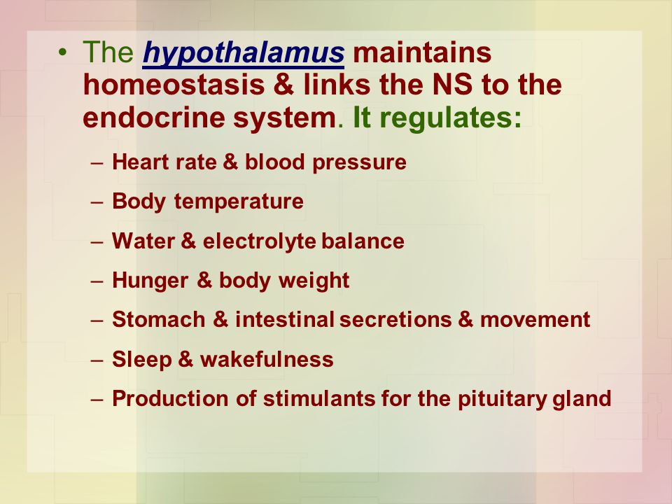The hypothalamus maintains homeostasis & links the NS to the endocrine system. It regulates:
