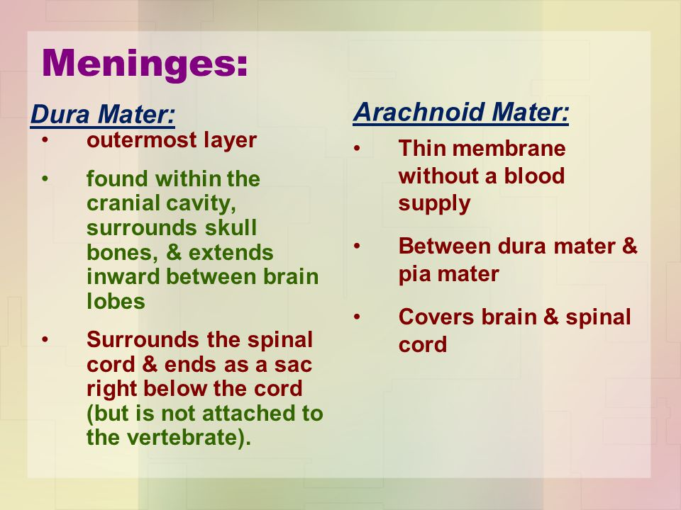 Meninges: Arachnoid Mater: Dura Mater: outermost layer