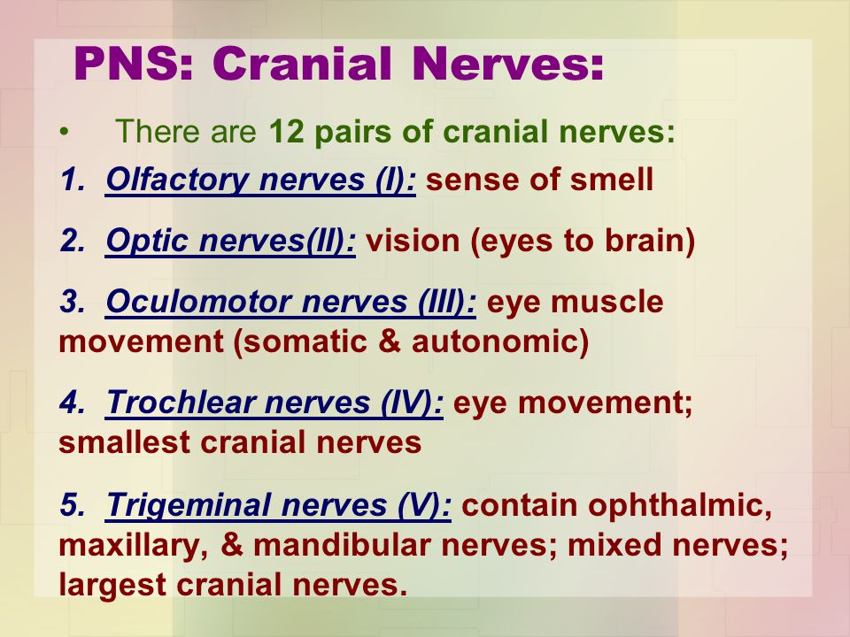 PNS: Cranial Nerves: There are 12 pairs of cranial nerves:
