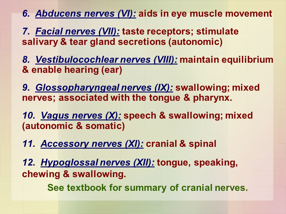 See textbook for summary of cranial nerves.