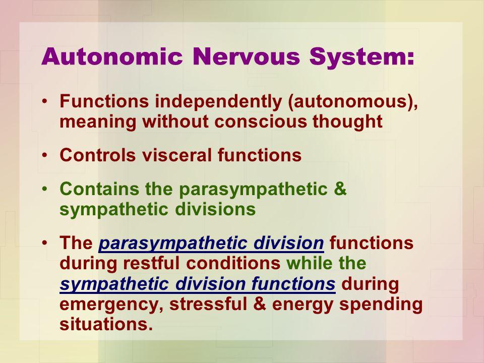 Autonomic Nervous System: