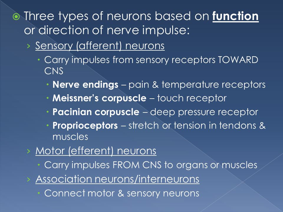 Three types of neurons based on function or direction of nerve impulse:
