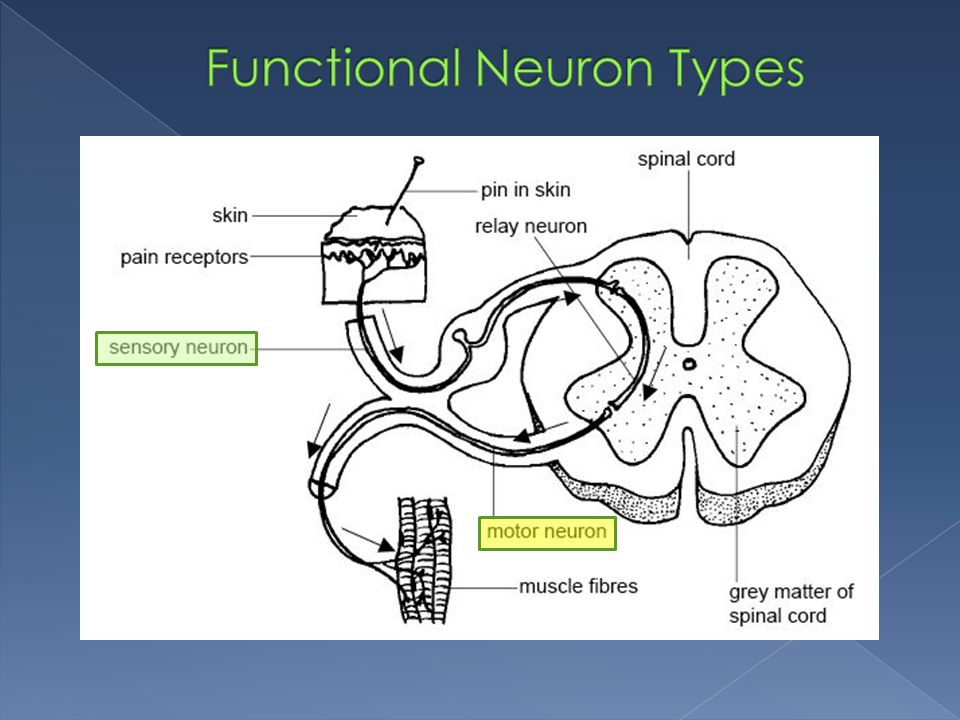 Functional Neuron Types
