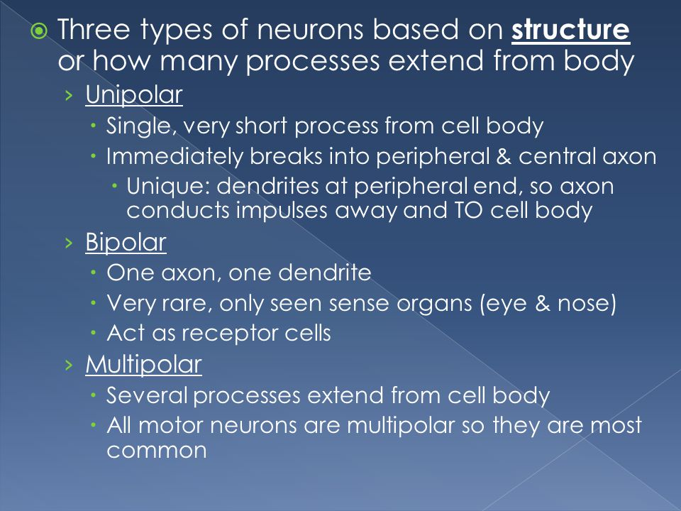 Three types of neurons based on structure or how many processes extend from body