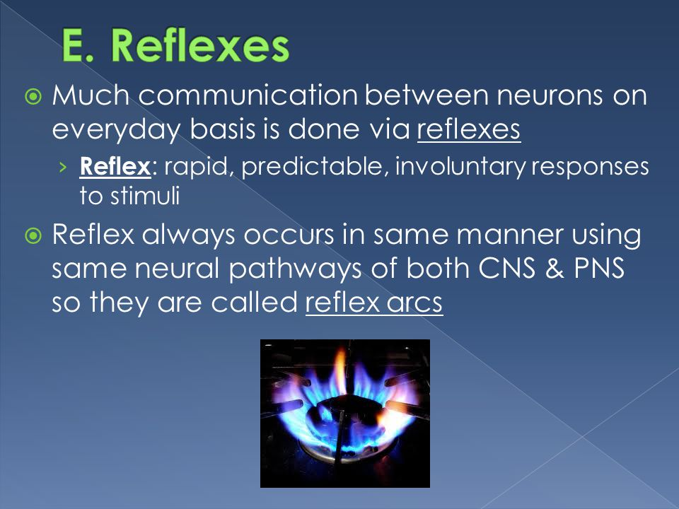 E. Reflexes Much communication between neurons on everyday basis is done via reflexes. Reflex: rapid, predictable, involuntary responses to stimuli.