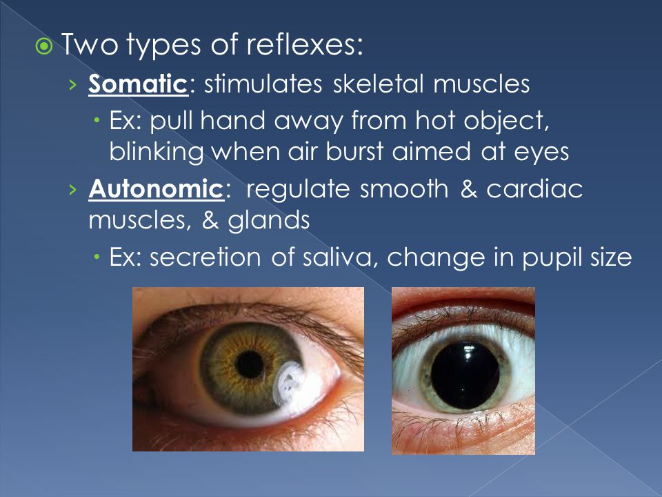 Two types of reflexes: Somatic: stimulates skeletal muscles