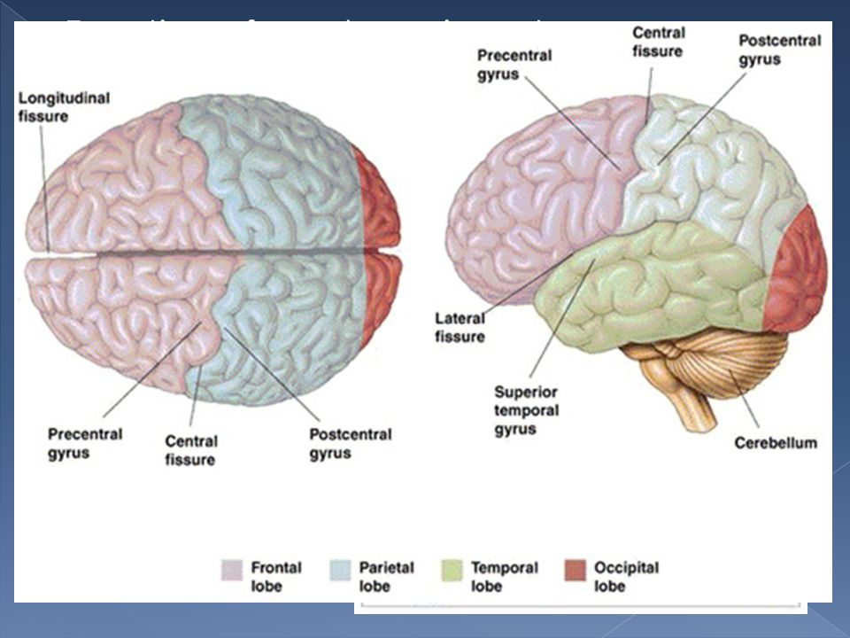 Function of cerebrum is vast