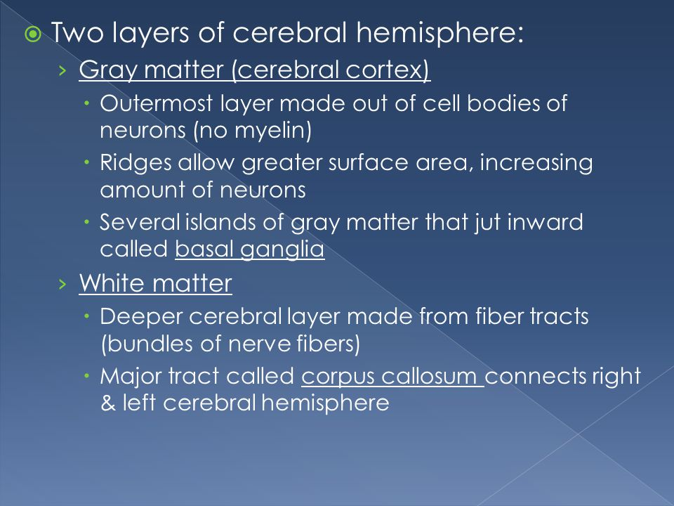 Two layers of cerebral hemisphere: