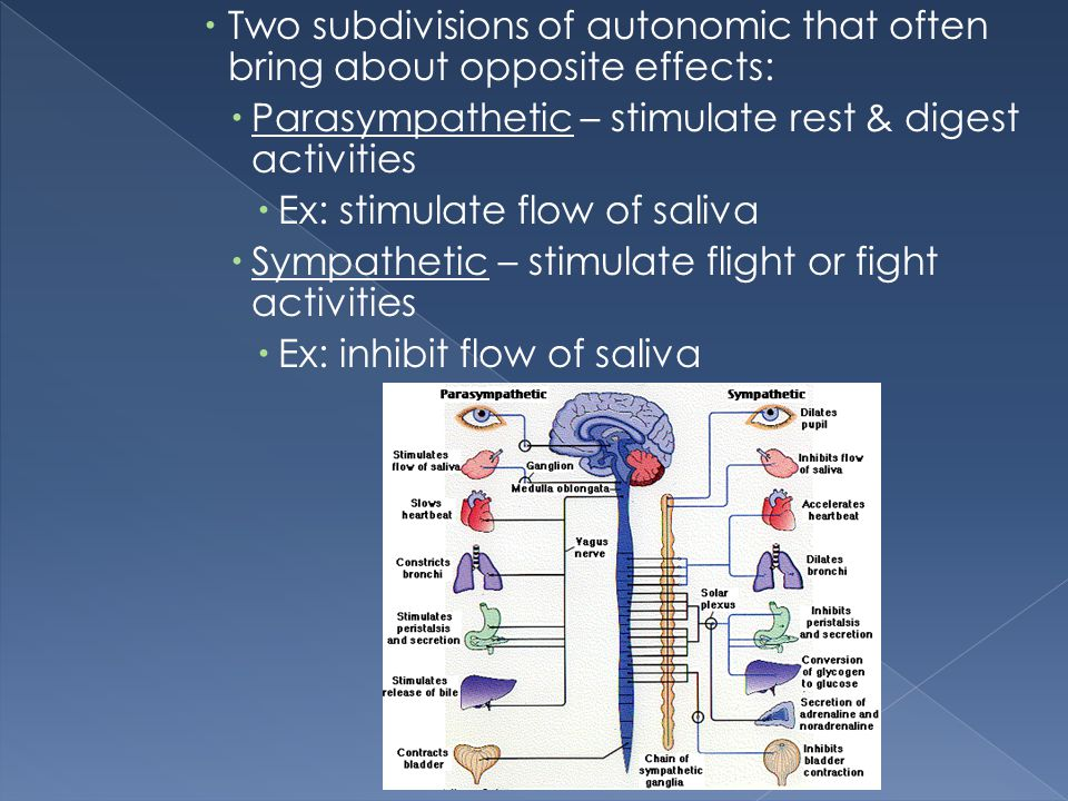 Two subdivisions of autonomic that often bring about opposite effects: