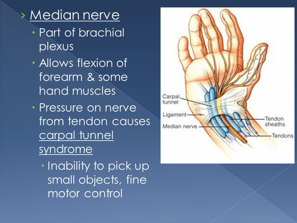 Median nerve Part of brachial plexus