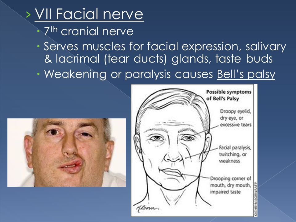 VII Facial nerve 7th cranial nerve