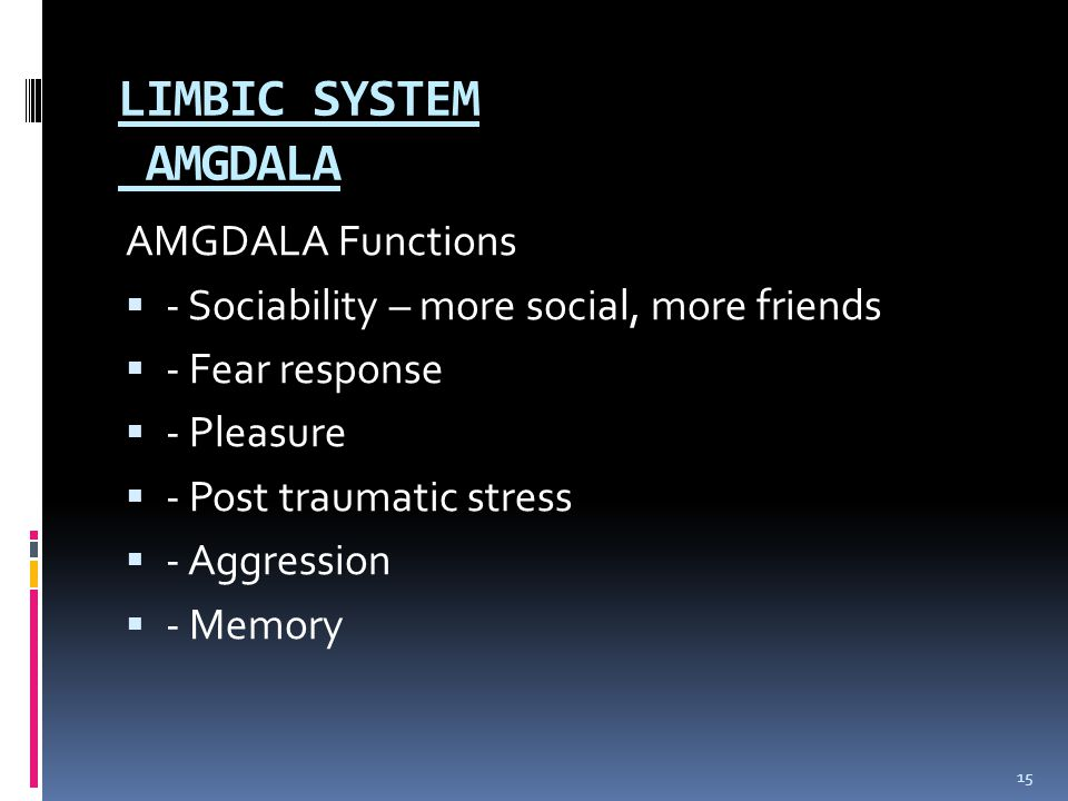 LIMBIC SYSTEM AMGDALA AMGDALA Functions