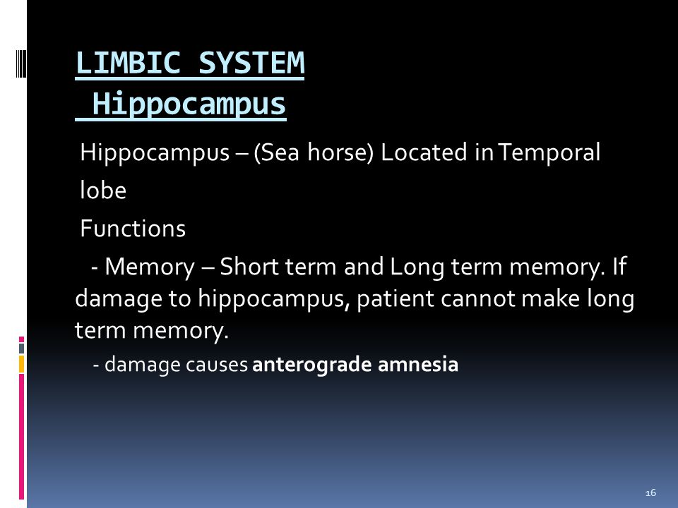LIMBIC SYSTEM Hippocampus
