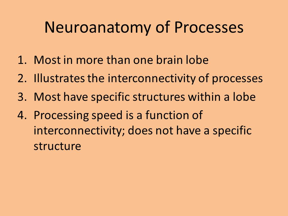 Neuroanatomy of Processes