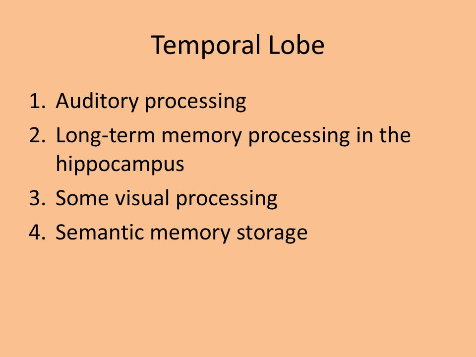 Temporal Lobe Auditory processing