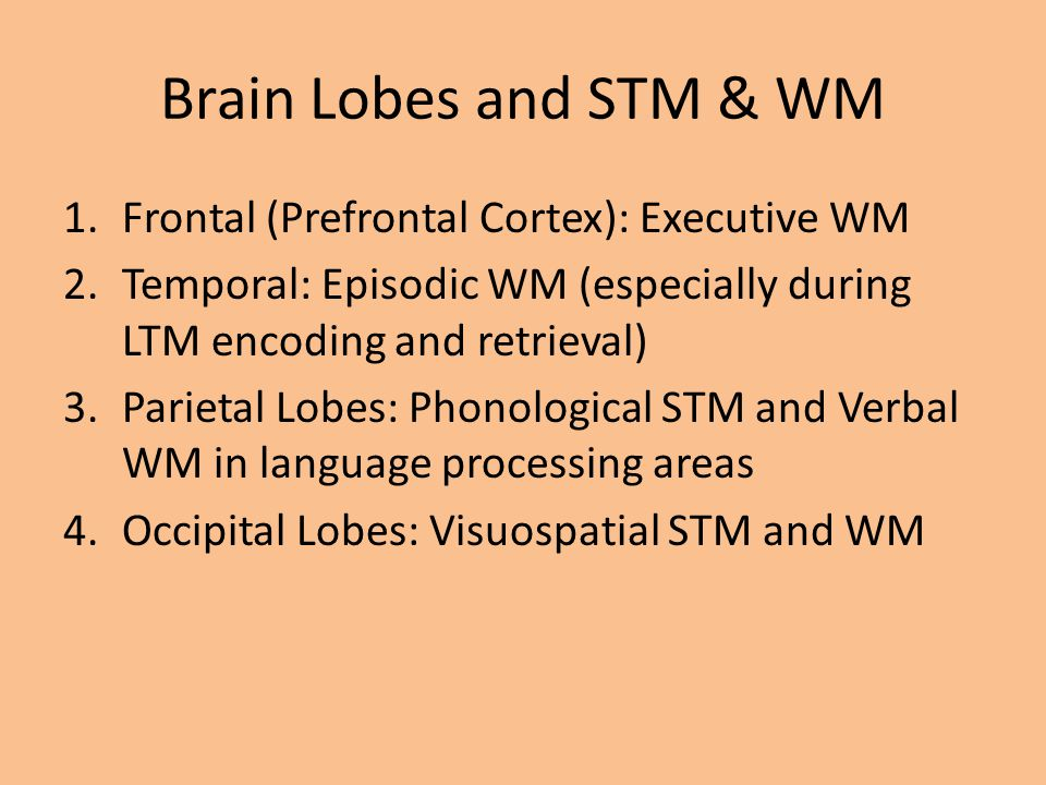 Brain Lobes and STM & WM Frontal (Prefrontal Cortex): Executive WM