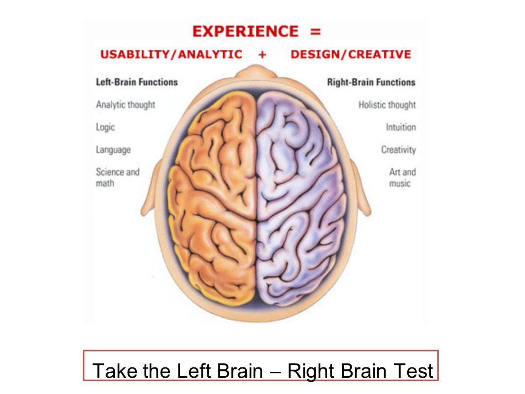 Left brain anatomy