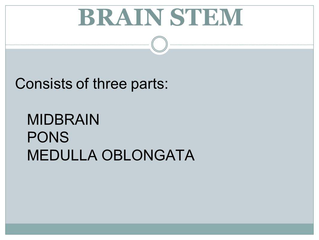 BRAIN STEM Consists of three parts: MIDBRAIN PONS MEDULLA OBLONGATA