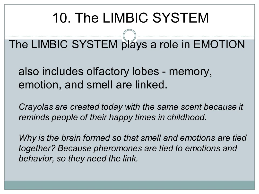 10. The LIMBIC SYSTEM The LIMBIC SYSTEM plays a role in EMOTION