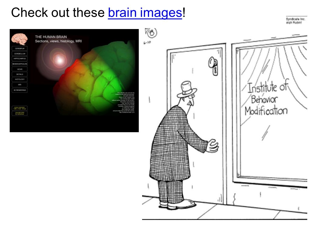 Check out these brain images!