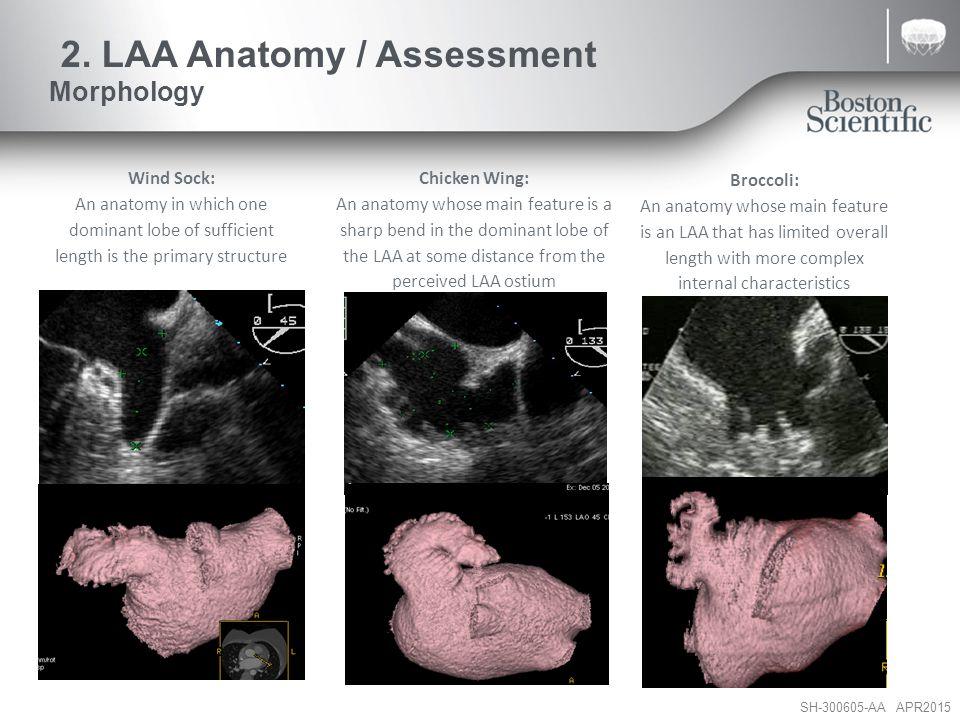 2. LAA Anatomy / Assessment Morphology