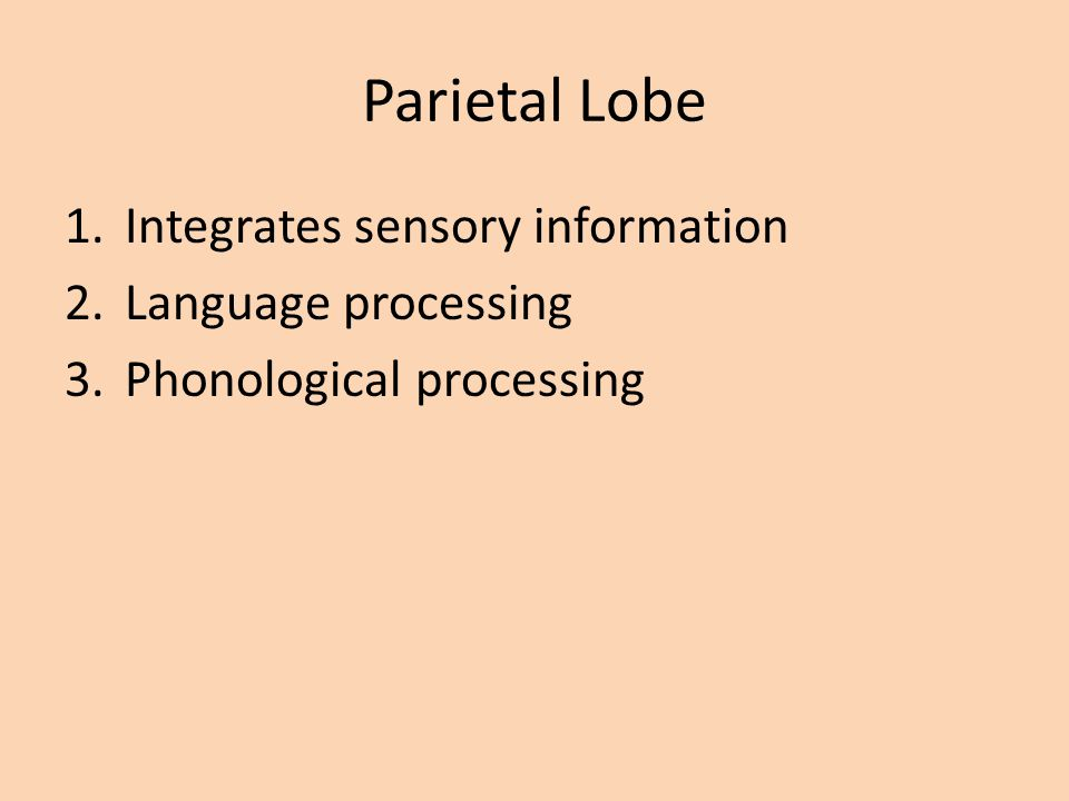 Parietal Lobe Integrates sensory information Language processing